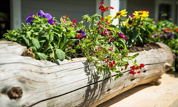 old wood log garden planter