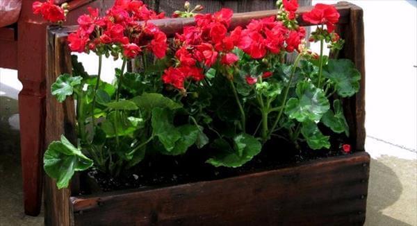 diy recycled box garden