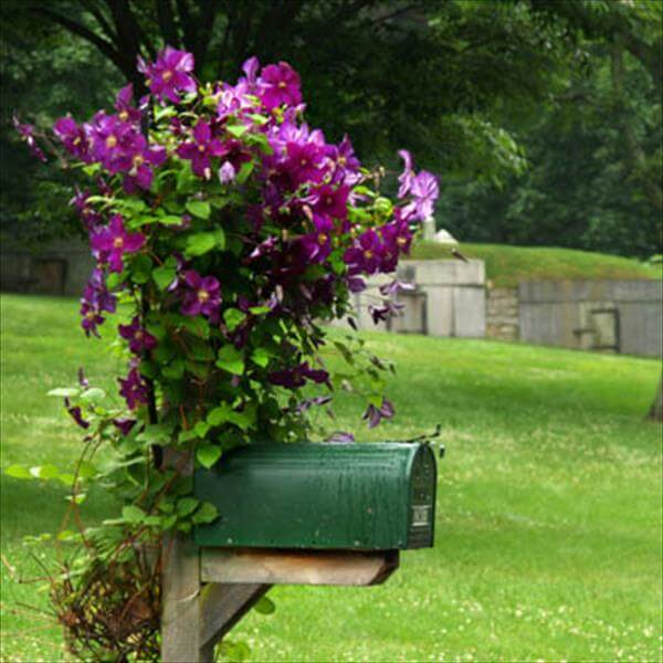 recycled planter idea
